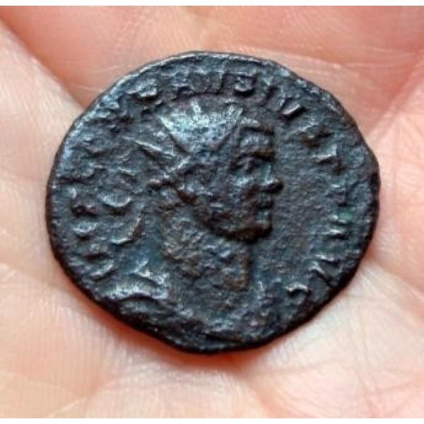 Carausius -  ZELDZAAM PAX AVGGG zeer interessant (zie verhaal)! (478)